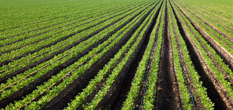 Agricultural field on sunny day Royalty Free Stock Images