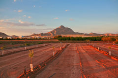 Agricultural field in sunset lights. Agricultural field on background of mountains in sunset lights. Valencia. Spain stock images
