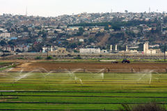 Agricultural field and Tijuana Royalty Free Stock Photo