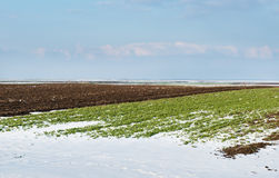 Field of under the snow Royalty Free Stock Images