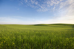 Agricultural field. View of agricultural field in summer Stock Photos