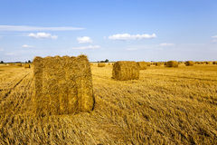 Agricultural field. An agricultural field on which grow up also the harvest  wheat Stock Images