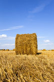Agricultural field. On which grow up also the harvest  wheat Stock Image