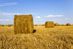 Agricultural field. An agricultural field on which grow up also the harvest  wheat Stock Image