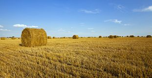 Agricultural field. An agricultural field on which grow up also the harvest  wheat Royalty Free Stock Photos
