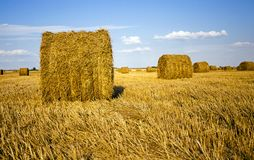 Agricultural field. An agricultural field on which grow up also the harvest  wheat Royalty Free Stock Image