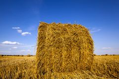 Agricultural field Royalty Free Stock Images
