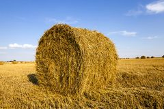 Agricultural field Royalty Free Stock Photography