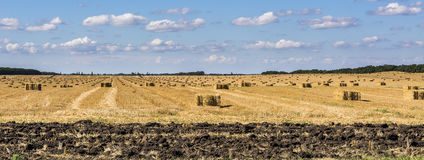 Agricultural field on which lie Straw Haystacks after the harvest Stock Photo