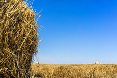 Agricultural field on which stacked straw haystacks after the wh Royalty Free Stock Images