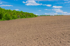Agricultural field before young crops come up Royalty Free Stock Photos