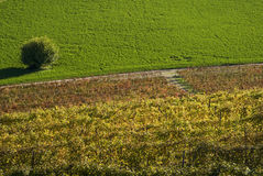 Agricultural fields. Scenic view on agricultural landscape stock images