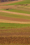 Agricultural fields Stock Photography