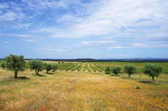 Agricultural fields, Alentejo region. Portugal royalty free stock image