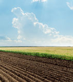 Agricultural fields and blue sky Royalty Free Stock Photo