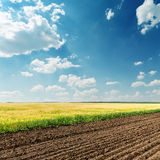 Agricultural fields and blue sky with clouds Royalty Free Stock Images