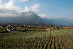 Agricultural  Fields,  Cemoro Lawang, East Java, Indonesia Royalty Free Stock Photography