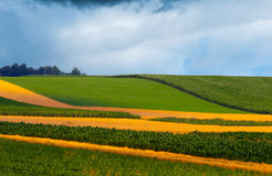 Agricultural fields on cloudy day Stock Image