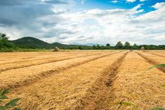 Agricultural fields, Countryside landscape. With cloudy Stock Photos