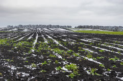 Agricultural fields covered by first snow in Ukraine at late autumnal season. Landscape with agricultural fields covered by first snow in Ukraine at late Royalty Free Stock Photography