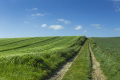 Agricultural fields and farm road on a sunny spring day in Normandy, France. Countryside landscape. Environment friendly Royalty Free Stock Photography