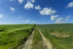 Agricultural fields and farm road on a sunny spring day in Normandy, France. Countryside landscape. Environment friendly Stock Image