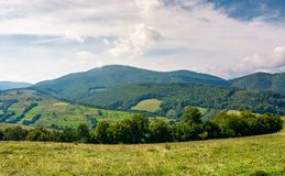 Agricultural fields on grassy hills in mountains. Beautiful rural landscape of Carpathians Royalty Free Stock Photos