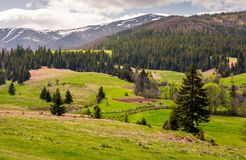 Agricultural fields on grassy slopes in springtime. Beautiful landscape of Carpathian mountain on overcast day Royalty Free Stock Photography