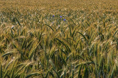 Agricultural fields Royalty Free Stock Images