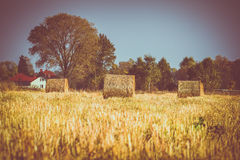 Agricultural fields with a haystacks. Stock Images