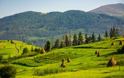 Agricultural fields with haystacks on hills. Beautiful summer scenery in mountains royalty free stock photography