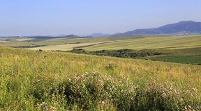 Agricultural fields in the hills of Altai Stock Image