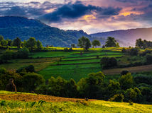 Agricultural fields on hills at sunrise. Agricultural fields with haystacks on hills in mountainous rural area at sunrise. dramatic countryside landscape Royalty Free Stock Photography