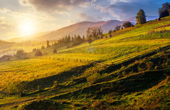 Agricultural fields on hills at sunrise. Agricultural fields on hills in mountainous rural area at sunrise Stock Photography