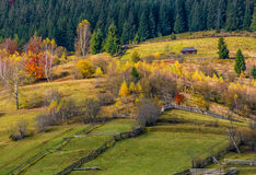 Agricultural fields on hillside near forest. Lovely autumnal scenery in mountains Royalty Free Stock Photo