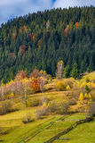 Agricultural fields on hillside near forest. Lovely autumnal scenery in mountains Royalty Free Stock Image