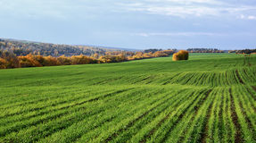 Agricultural fields and meadows Stock Photos