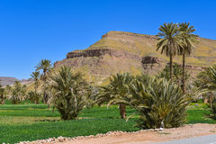 Agricultural fields, Morocco landscape Royalty Free Stock Image