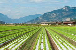 Agricultural fields in Northern Italy Royalty Free Stock Photo