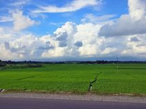 Agricultural fields in the northern part of bengal with a clear winter sky royalty free stock photos