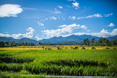 Agricultural fields in Indonesia Stock Images