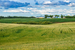 Agricultural fields of potato and barley with farm yard and oil Stock Photography