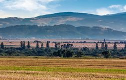Agricultural fields of Slovakia. Beautiful agrarian countryside landscape Stock Photo