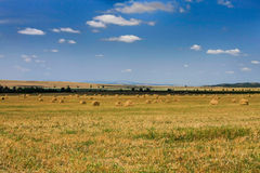 Agricultural fields, spread hay bales Royalty Free Stock Photo