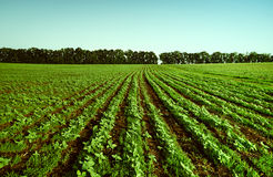 Agricultural fields Stock Image