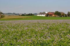 Agricultural fields in Steyr Land. Austria Royalty Free Stock Image