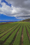 Agricultural fields in Tenerife Stock Image