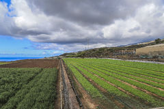 Agricultural fields in Tenerife Stock Photography