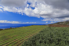 Agricultural fields in Tenerife Royalty Free Stock Photography