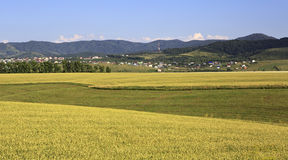 Agricultural fields and the town of Belokurikha Royalty Free Stock Photo